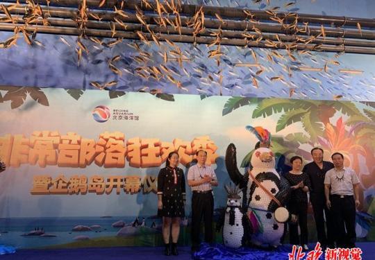 """企鹅来了!北京海洋馆打造""""非常部落狂欢季"""""""