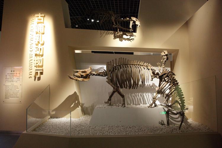 北京自然博物馆古哺乳动物专题展7月6日正式对公众开放[墙根网]