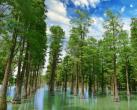 """上海唯一那片""""水上森林""""7月10日起重新免费开放"""