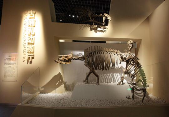 北京自然博物馆古哺乳动物专题展7月6日正式对公众开放