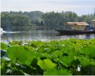在美景+清凉的湿地公园感受仲夏之美