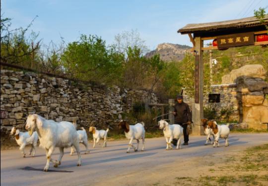 京郊如果逛腻了,那就去天津的古村落避暑吧