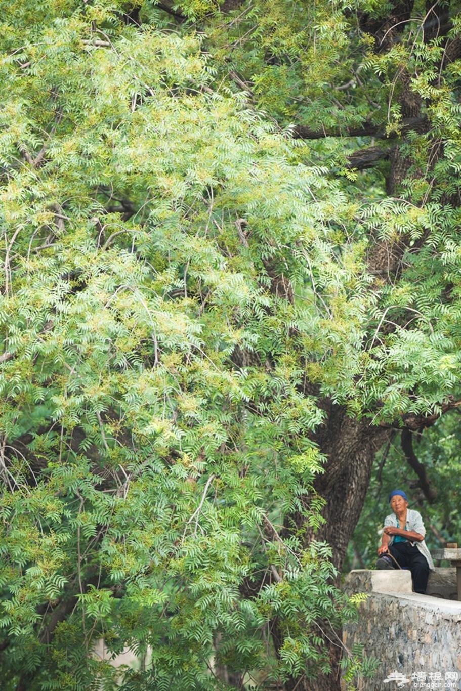 住华北最美稻田民宿青籽树,坐拉风小火车,拍奇幻星空大片[墙根网]