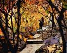 """最适合秋天北京周边自驾的5条山路,秋景一个比一个美,自驾游爱好者的""""天堂"""""""