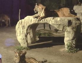 """8月8日可去上海野生动物园探动物""""夜生活"""""""