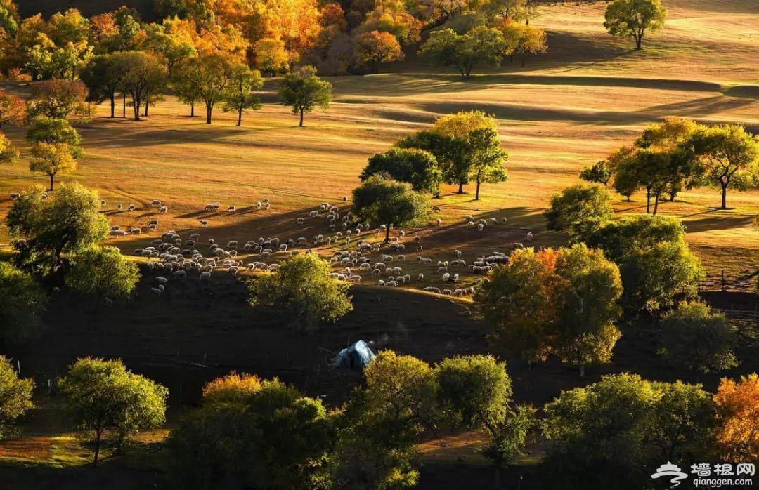 离北京最近最美的大草原,目之所及皆是惊艳的风景,来一场说走就走的周末自驾游![墙根网]