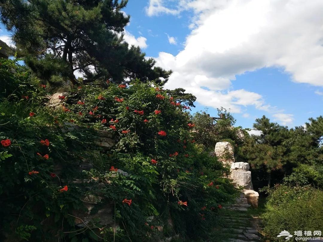 太爽了!这个北京城最美的森林公园,景美人又少,最适合中老年健身、吸氧、洗肺![墙根网]