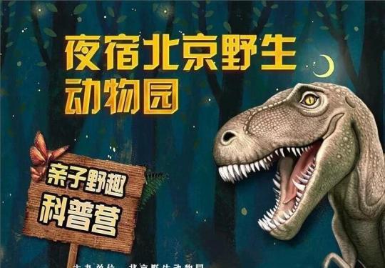 夜宿北京野生动物园开单飞营啦!趣味任务书、竞赛小游戏、夜访狮虎狗