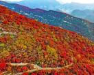 2019第八届坡峰岭红叶节即将震撼开幕:万亩黄栌树林,秀出最美中国红!