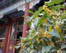 中秋节北京各大公园将开展50项活动,请收好这份攻略!