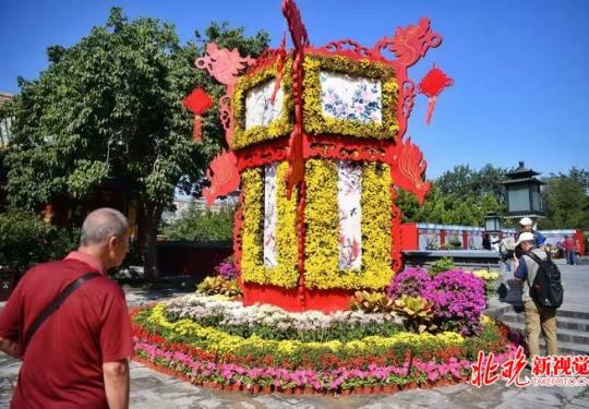 北海公园菊花展将展至10月15日,现场展出悬崖菊、多头菊等千盆菊花
