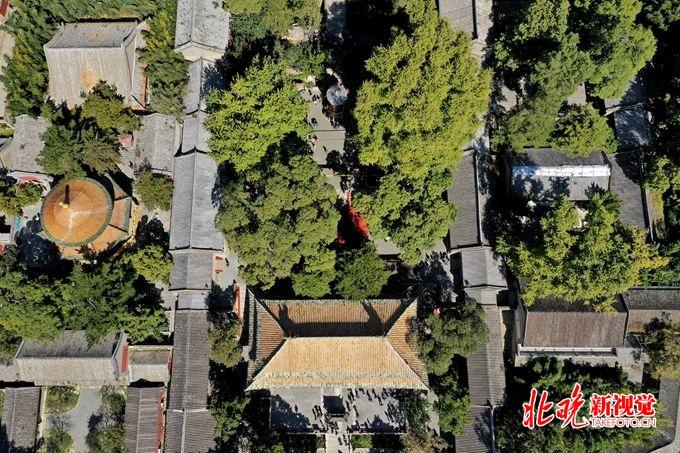 潭柘寺柘树文化节开幕,重现千嶂绿色生态景观[墙根网]