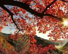 仙西山紅葉節