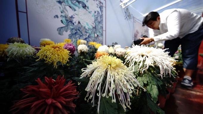 北京市第四十届菊花展北海阐福寺开展,近百个品种的菊花闪亮登场[墙根网]