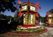 北京市第四十屆菊花展北海闡福寺開展,近百個品種的菊花閃亮登場
