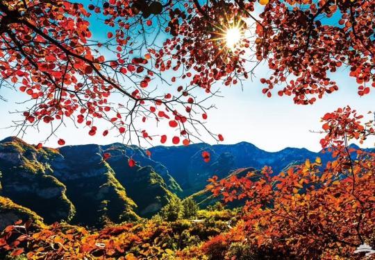 不必再去香山看人海,华北最壮观的山地红叶景观在北京这儿