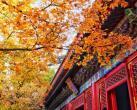 北京即将迎来红叶最佳观赏期,今年城区观赏期略有推迟