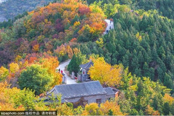 香山公园赏红叶,最不可错过的秋季彩叶盛事[墙根网]