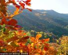 香山公园赏红叶,最不可错过的秋季彩叶盛事