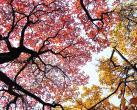 2019金海湖红叶观赏季到来 平谷喊您拍红叶
