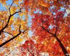 北宫国家森林公园彩叶节