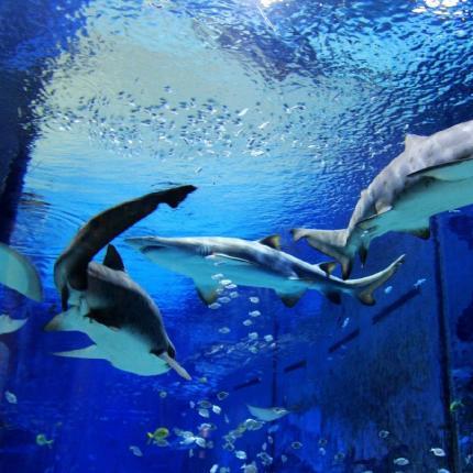 【海淀区•北京海洋馆】近距离与动物接触!仅88元抢「北京海洋馆」价值160元1大2小周末亲子票!让你在海洋中遨游!快来和海洋馆说HI!