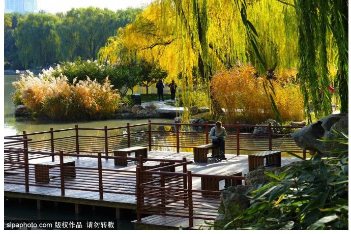 """免费!这座市区公园已成一片""""金色国度""""!片片金黄太耀眼![墙根网]"""