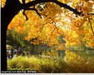 """免费!这座市区公园已成一片""""金色国度""""!片片金黄太耀眼!"""