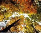 京城最惊艳的秋日梦境,每一眼都让人迷醉……看过就忘不了!