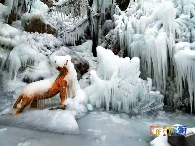 """北京古燕京八景""""虎峪辉金""""开放新景观!冰瀑奇观美轮美奂![墙根网]"""