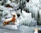 美爆了!京郊冰瀑奇观惊艳了整个冬天~