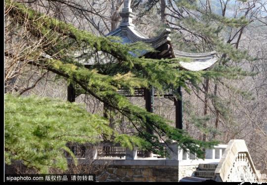 北京植物园内万物报春,科普那些奇妙的植物们