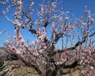 航拍!海淀4000亩粉红花海上线!壮观!