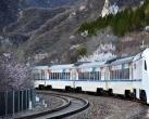 北京春天的代表景观,那趟花海列车,是在哪儿拍的?