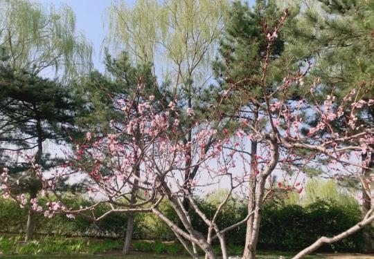 2020北京园博园开放时间