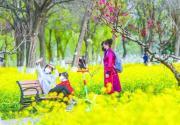 京城梨园公园油菜花盛放 一片金黄