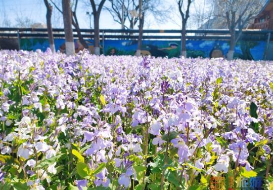 春风送暖,北京世界花卉大观园百花争艳