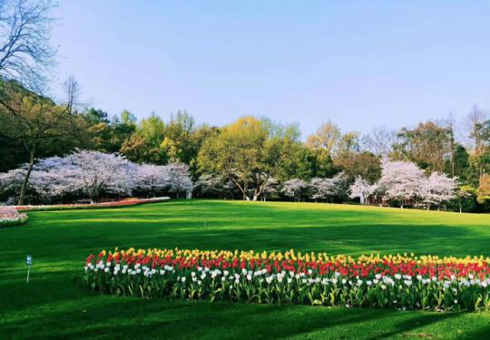 4月20日起,太子湾公园将取消预约入园