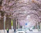 小众景点去年鲜为人知,如今一夜爆红,来了才知道北京春天有多美