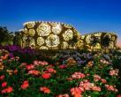 2020北京月季文化节在大兴开幕 精彩将持续一个月