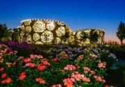 2020北京月季文化節在大興開幕 精彩將持續一個月