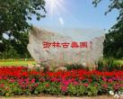 """2020大兴桑椹节如期而至 """"桑海甜园""""中留下""""安定印象"""""""