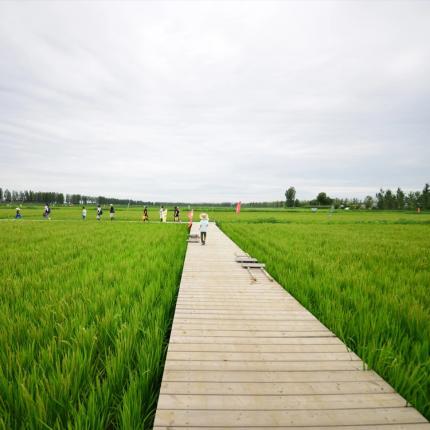 【2020六一活动】小农夫养成记第一课锄禾(耕田插秧体验,我与水稻共成长)