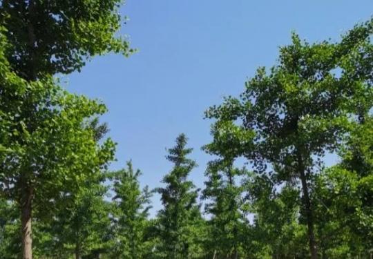 """大兴造林收获""""宝藏""""景点!又到花季,快来打卡"""