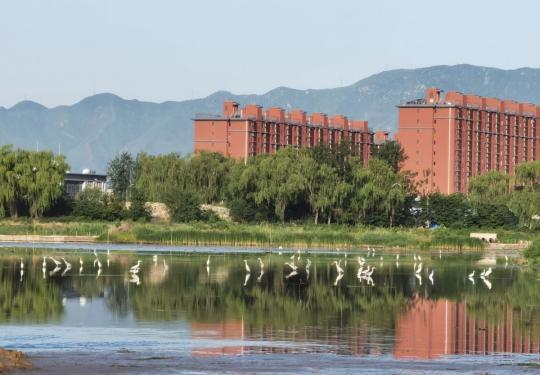 诗意盎然!故宫北院南侧水域迎来白鹭、苍鹭