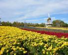 2020第十二届北京菊花文化节开幕