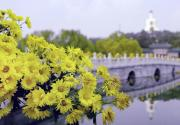 2020年第十二届北京菊花文化节北海公园展区攻略