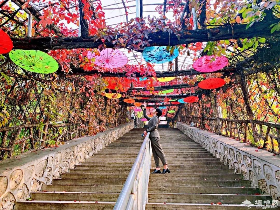 2020天津蓟州溶洞风景区第一届红叶节开幕[墙根网]