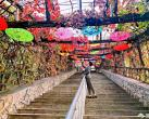 2020天津蓟州溶洞风景区第一届红叶节开幕