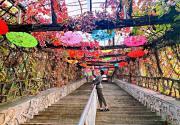 2020天津薊州溶洞風景區第一屆紅葉節開幕